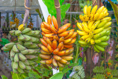 Banana plants. In the garden Royalty Free Stock Image