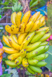 Banana plants Stock Photo