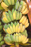 Banana plants Royalty Free Stock Images
