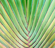 Banana plants texture abstract background Stock Photos