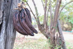 Banana podre Foto de Stock