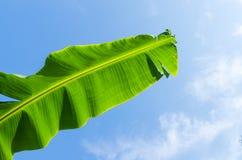 Banana prowadzenie na niebieskim niebie obrazy stock