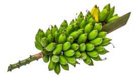 Banana. Raw green yellow bunch stock image