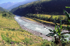Banana and rice near river Stock Image