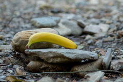 Banana on a rock with water in background Stock Image
