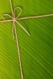 Banana rope and leaf. Ribbon and rope made from banana bark on banana leaf, global warning concept Royalty Free Stock Image