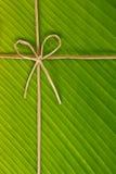 Banana rope and leaf. Ribbon and rope made from banana bark on banana leaf, global warning concept Royalty Free Stock Photos