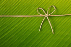 Banana rope and leaf. Ribbon and rope made from banana bark on banana leaf, global warning concept Stock Photography