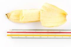 Banana with ruler Royalty Free Stock Image