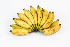 Banana selvagem com fundo branco Imagens de Stock Royalty Free