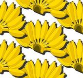 Banana sem emenda do amarelo do teste padrão no fundo branco Fruto do verão Foto de Stock