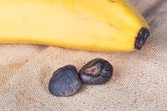 A banana semeia o close up fotos de stock royalty free