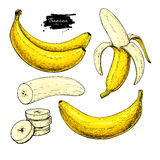 Banana set vector drawing. Isolated hand drawn bunch, peel banana and sliced pieces. Summer fruit artistic. Banana set vector drawing. Isolated hand drawn bunch Royalty Free Stock Photography