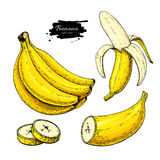 Banana set vector drawing. Isolated hand drawn bunch, peel banana and sliced pieces. Summer fruit artistic  style illustration. Detailed vegetarian food Royalty Free Stock Images