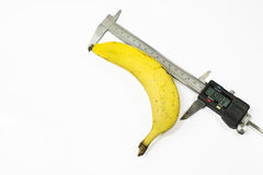 Banana size. Banana fruit measured in length with a digital caliper , on white background royalty free stock photos