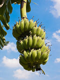 Banana sky background. Royalty Free Stock Images