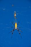 Banana Spider Stock Image