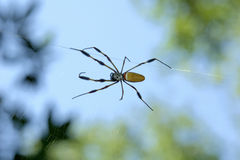 Banana Spider. A banana spider on its web, macro taken with telephoto lens stock photo