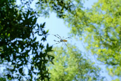 Banana Spider 2. A banana spider on its web, macro taken with telephoto lens stock photos