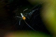 Banana Spider Stock Photos