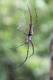 Banana Spider. This banana spider is the size of a persons hand stock image