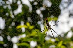 Banana spider Stock Photography