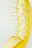 Banana with spine Stock Photography
