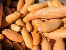 Banana Squash Stock Images