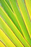 Banana stem stripe Stock Photo