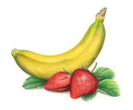 Isolated banana and strawberries. Still-life hand drawn with colored pencils realistic banana and strawberries stock illustration