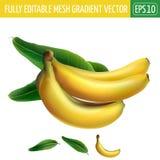 Banana su priorità bassa bianca Illustrazione di vettore Immagini Stock Libere da Diritti
