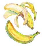 Banana tirada mão Fotos de Stock