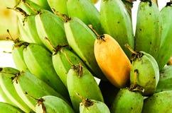 Banana on tree Stock Images