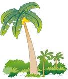 Banana tree. Vectorial illustration of banana tree and tropic plants. EPS file available Royalty Free Stock Photo