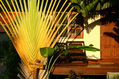 Banana tree by the bungalow. At sunset royalty free stock image