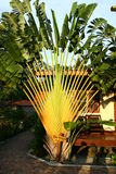 Banana tree by the bungalow Stock Photography