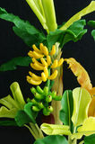 Banana tree, clay, handmade product, art Stock Image