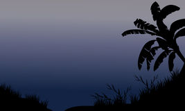 Banana tree and grass silhouette Royalty Free Stock Photography