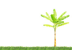 Banana tree on green grass Stock Photos