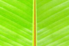 Banana Tree Leaf Royalty Free Stock Photos