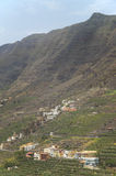 Banana tree plantation in the mountainside. Gomera. Canary Islan Stock Photo