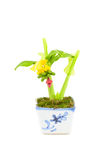 Banana tree plastic Stock Image