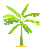 Banana Tree-vector Stock Photography