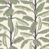 Banana tree. On a white background in seamless pattern Royalty Free Stock Photo