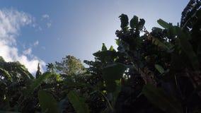 Banana Trees and vegetation on mountain lake shore. Drone aerial. Sampaloc Lake, San Pablo City, Laguna, Philippines - February 20, 2018: Banana Trees and stock video