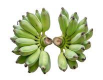 Banana unripe two bunch. Isolated on background stock image