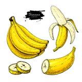 Banana ustalony wektorowy rysunek Odosobniona ręka rysująca wiązka, łupa banan i pokrajać kawałki, ilustracji