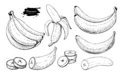 Banana ustalony wektorowy rysunek Odosobniona ręka rysująca wiązka, łupa banan i pokrajać kawałki, Lato owoc grawerujący styl Zdjęcia Royalty Free