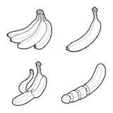 Banana. Vector Illustration Hand Drawn Fruit Cartoon Art vector illustration