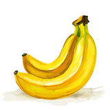 Banana  vector illustration  hand drawn  painted Royalty Free Stock Photos